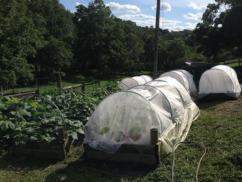 A hoop house on Tamarack Farm in Spring Mills, PA.