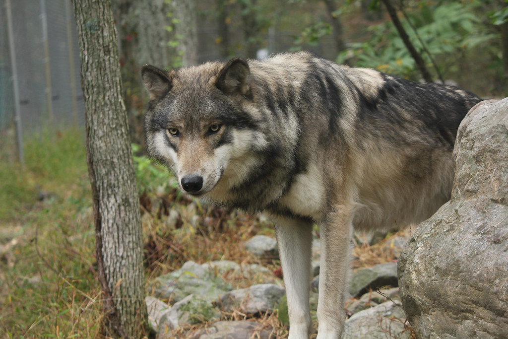 Lakota Wolf Preserve in Columbia New Jersey