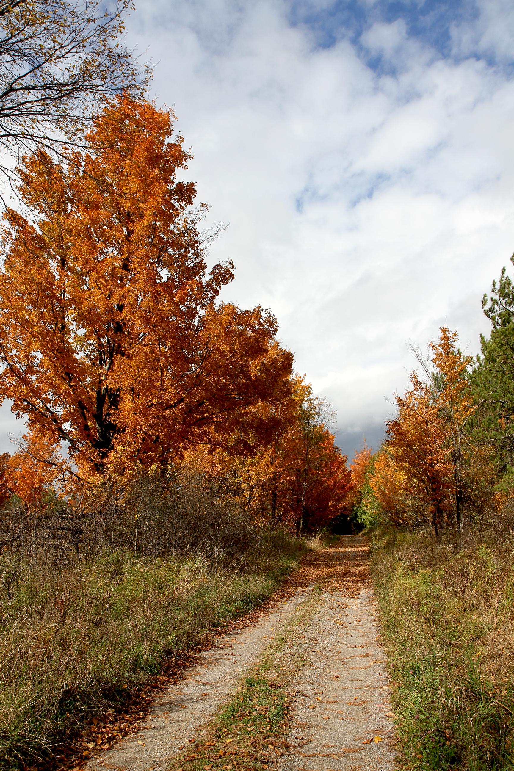 Autumn drive37