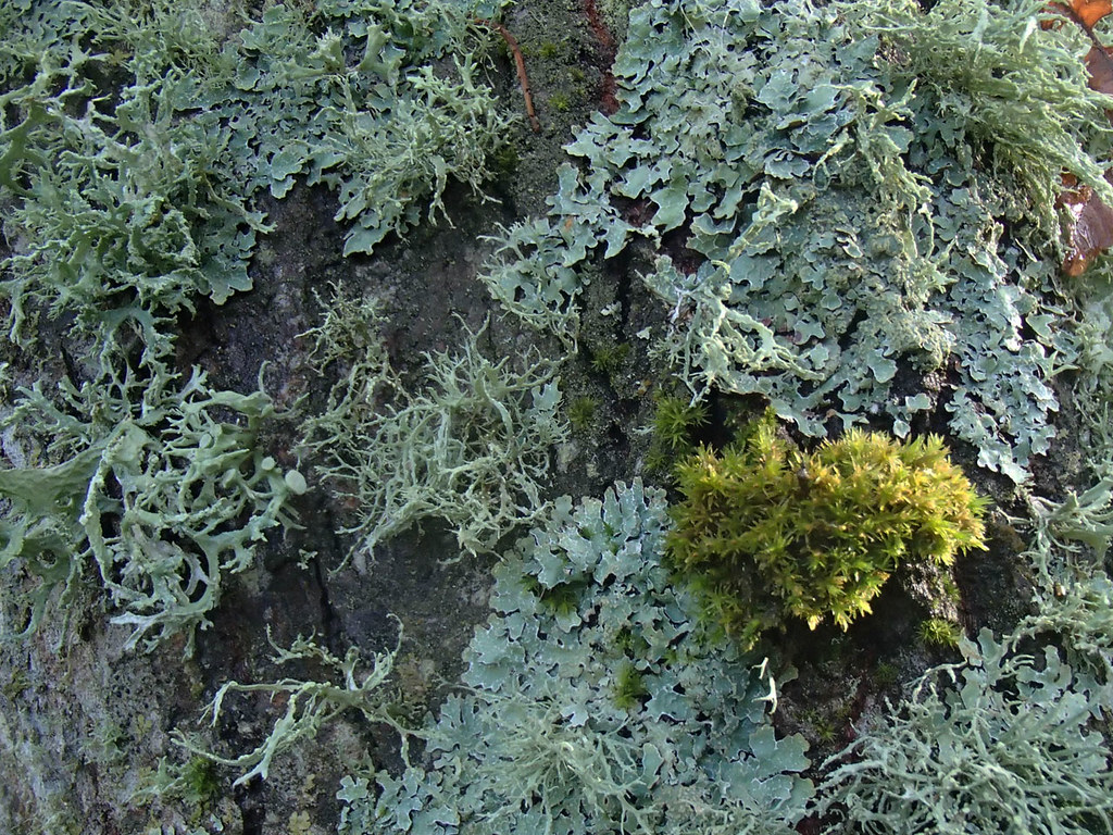 moss-and-lichen