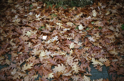 leaves, leaves everywhere