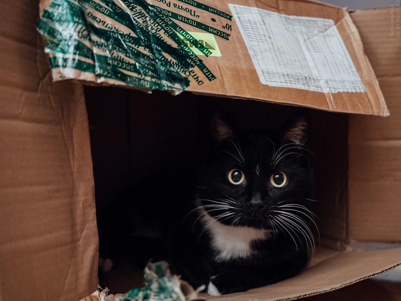 A box full of kitteh