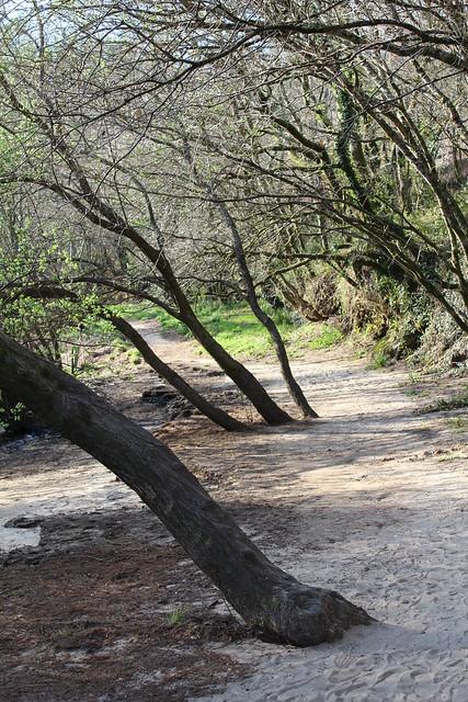 Área recreativa de O Xirimbao - Teo
