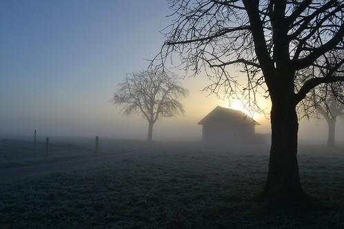 Tout devient merveilleux dans la brume.