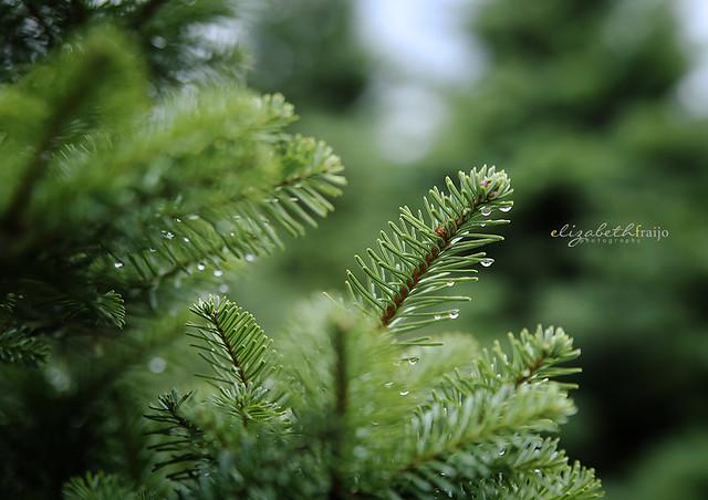 Tree06W