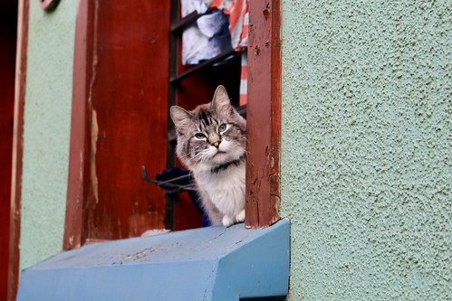 El gato de calle Atahualpa