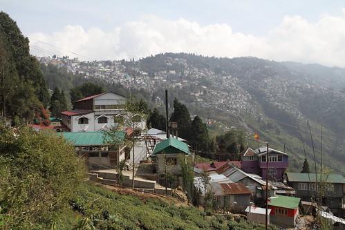 india tea darjeeling inde thé