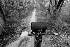 Berowra to Wondabyne ride-15