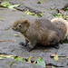 plump friendly squirrel in Taiwan by the_green_squirrel