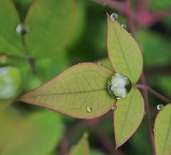Rain drop central