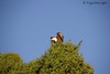 Eagle in the Tree by MeganKarine
