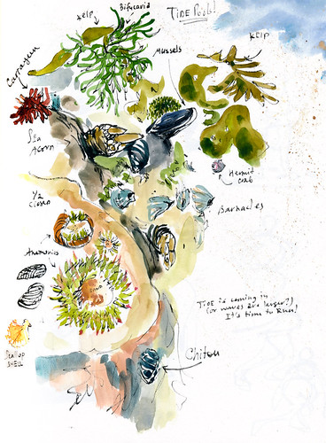 Sketchbook #92: Point Lobos - Part 2