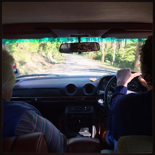 258/365 • I'm riding in the back seat while my aunty - mothership of @littleearthstories - directs #M to a #Landcare orchid orgy. We're going exploring! • #258_2015 #family #mercedes #W123 #family #nature #Binginwarri