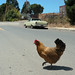 Bancroft Chicken by mohrgo