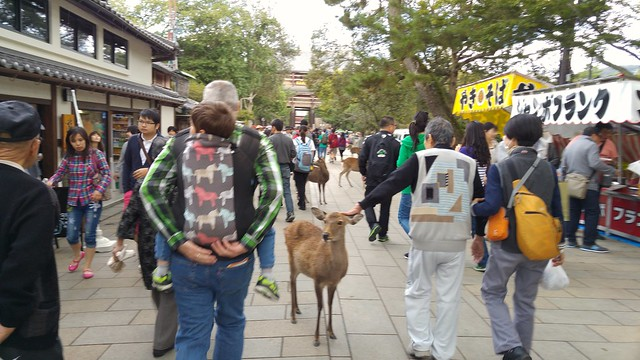 Heading to the Todaiji Temple. After travelling around less touristy parts of Japan, this was a bit of a shock!