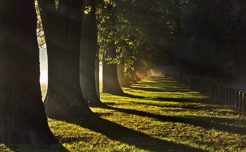 park uk shadow mist tree fog wales sunrise canon landscape eos dawn britain outdoor cymru cardiff caerdydd 5d llandaff pontcanna mkiii wentloog llandafffields stevegarrington