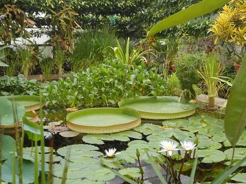 Eckersley Botanic Gardens visit 1
