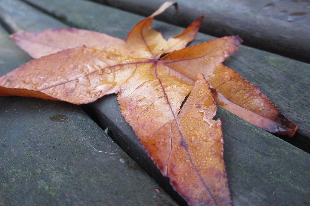 Naturaleza de otoño