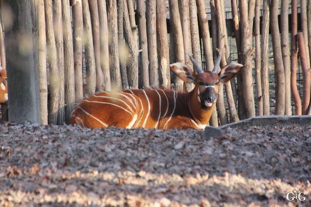 Besuch im Berliner Zoo 06.12.201558