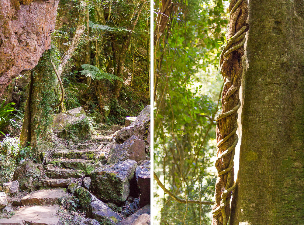 canyon lookout rainforest gold coast