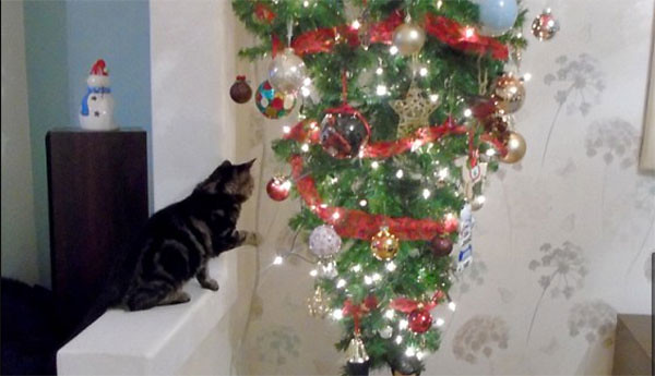 Here 39 S How Christmas Trees And Cats Can Live In Harmony