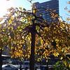 Tiffany lamp tree, 11/19/16