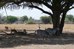 malawi 163