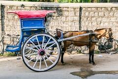 Horse Carriage, Mysore