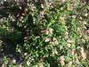 Nandi hills - wild flowers