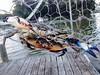 Blue Crab Double by mddnrfish