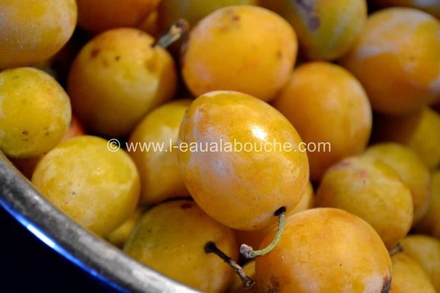 Mirabelles au Pfümli-Eau de Vie de Prune © Ana Luthi Tous droits réservés 0003