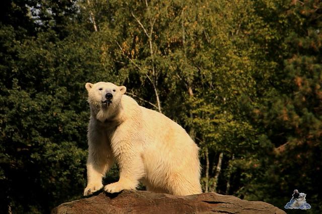 Tierpark Berlin 30.08.2015  0179