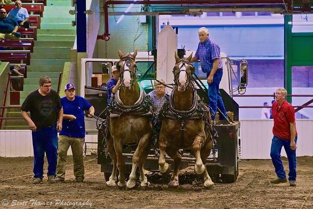 Championship Horse Pulling