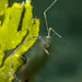 Skeleton shrimp by and_reni