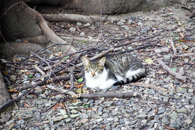 Today's Cat@2015-09-16