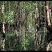 Mangroves by 1yen
