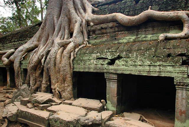 Tree roots enveloping a temple at Angkor Wat, Cambodia