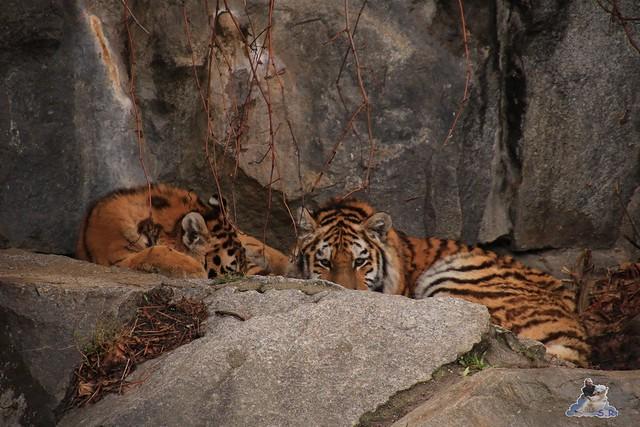 Tierpark Berlin 22.11.2015   090
