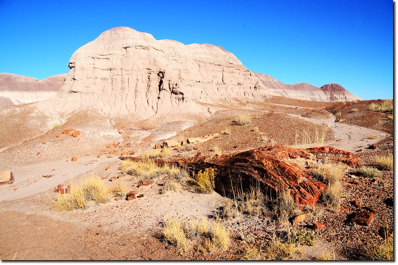 Long Logs Trail, Petrified Forest National Park 4