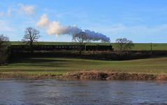 Riverside steam...GWR locomotive Bradley Manor