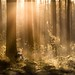 Enchanted forest by iwona_podlasinska