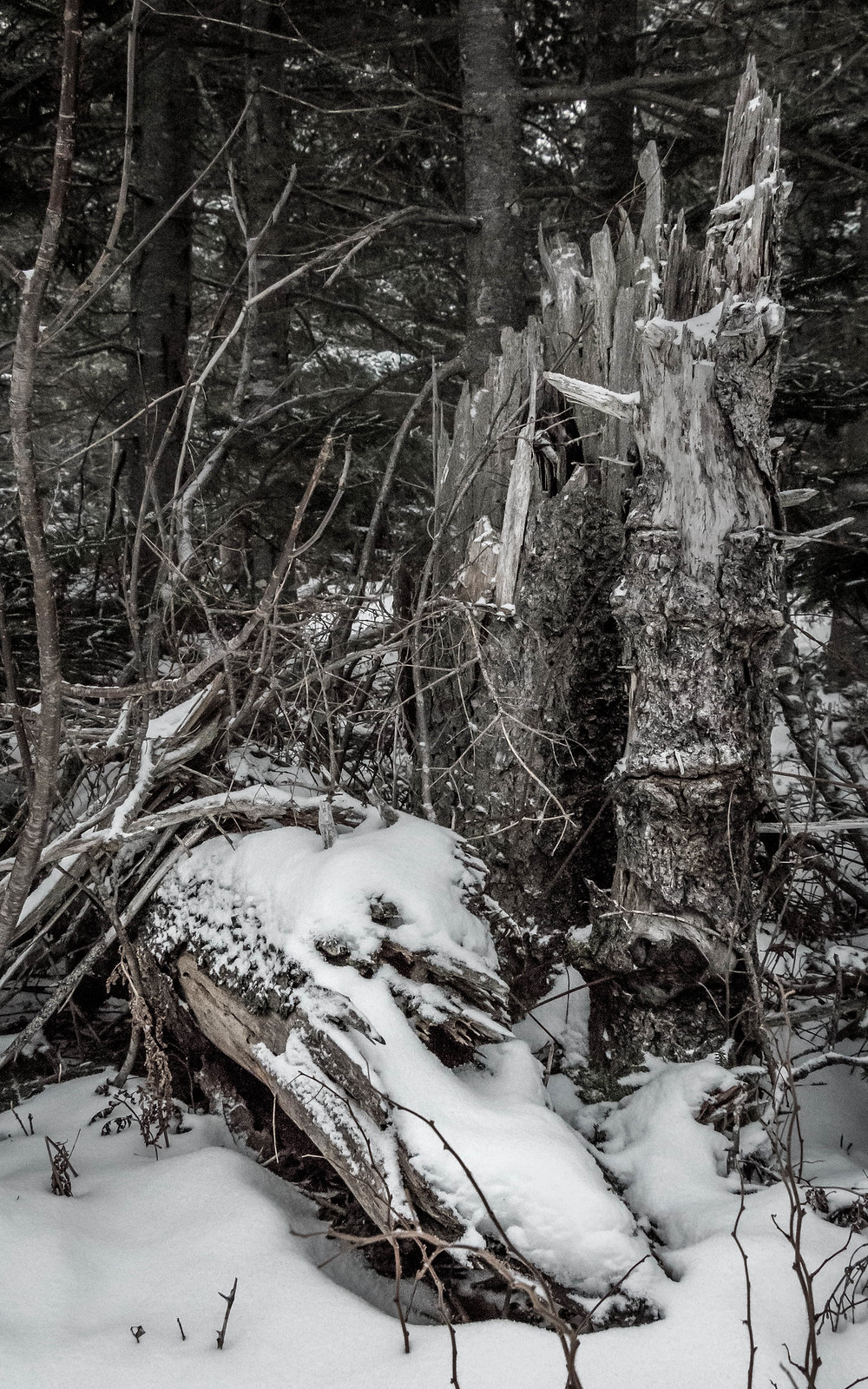 snowy forest decay