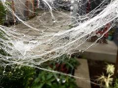 spider web droplets