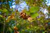 272:365 - 10/14/2016 - Fall Leaves