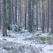 First snow in the forest by tanvirtas13