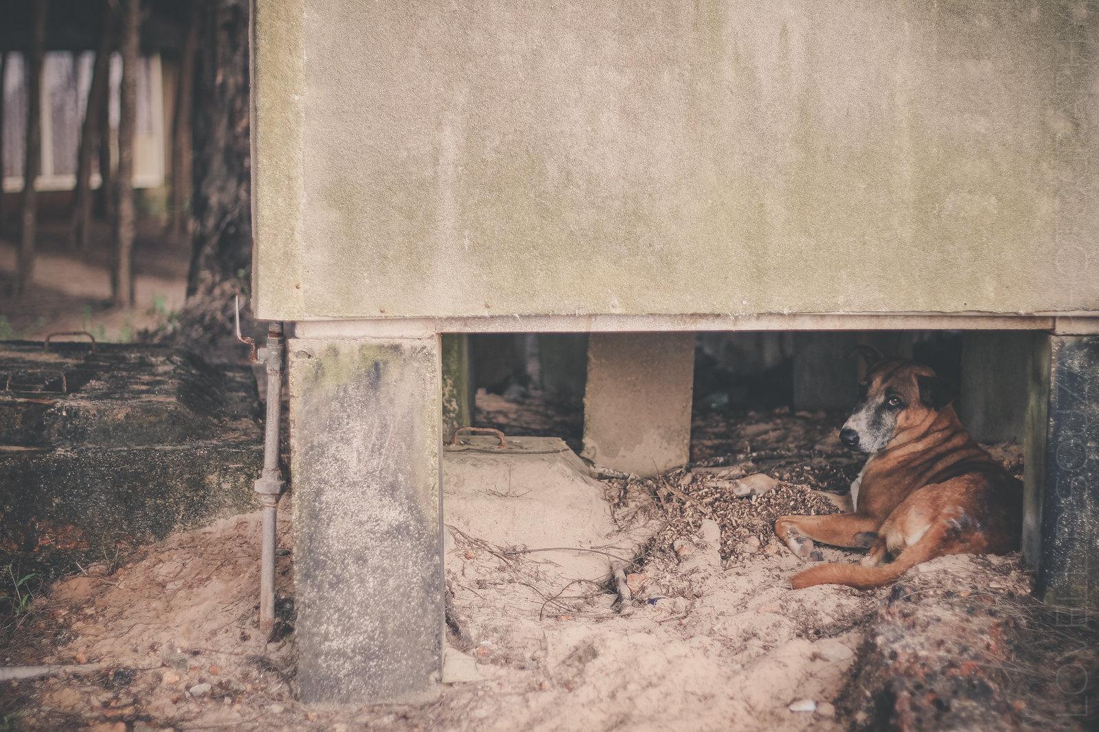 A dog at the Vengurla Beach