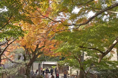 【写真】紅葉 : 安楽寺
