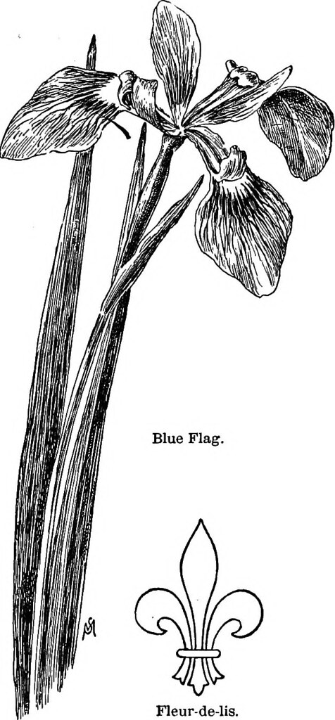 Image From Page 88 Of Familiar Flowers Of Field And Garde