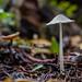 Redwoods Shroom by kevolution15