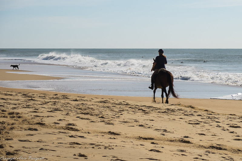 Ballade sur la plage 21907205799_48a7219bff_c